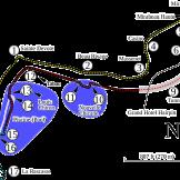 circuit_de_monaco
